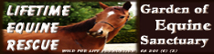Lifetime Equine Rescue/ Garden of Equine Sanctuary